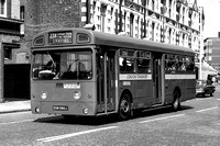 Route 238, London Transport, SMS590, EGN590J