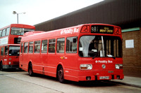 Route 981, London Transport, LS256, THX256S, Park Royal