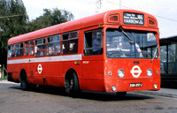 Route 186, London Transport, SMS257, EGN257J, Edgware